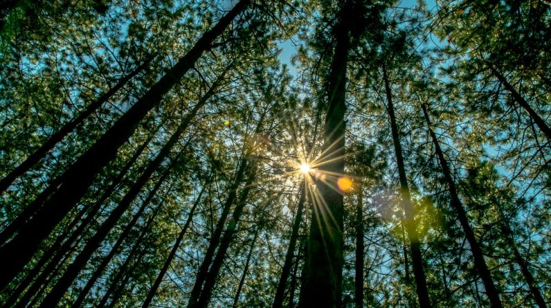 forest therapy and immune system